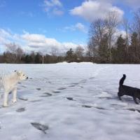 朝のプチ犬猫散歩&公園へお散歩へ行った水曜日