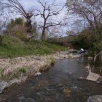 越辺川の生きものさがし~里山体験プログラム~
