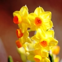 春を待ちわびる・・・④ 【ひで某】