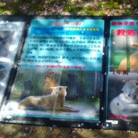犬猫の殺処分0を目指すデモ@大阪
