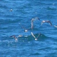『岩礁沖』 群れ飛ぶ