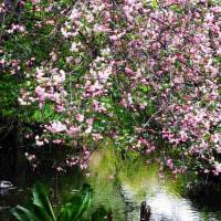 花海棠の花言葉