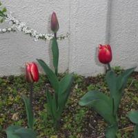 咲き始めたお花達