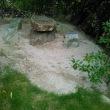 珊瑚藻球石灰岩