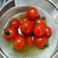 ミニトマトを洗いました