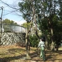 樹林地作業(0323)