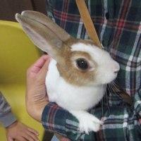 ウサギ専門診療科72 斜頸からの奇跡の快復