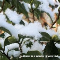 雪の無いお正月を