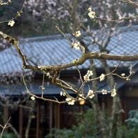 東慶寺の早春をいける
