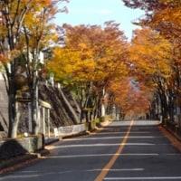 """11/25(金)、わが町""""清見台""""の紅葉・黄葉!"""