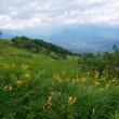 白馬五竜高山植物園(5)