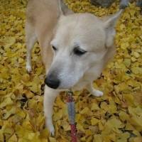 愛犬まるの介護生活を支えてくれたこと