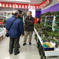 国風盆栽展、後期が始まりました。