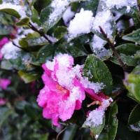 雪をまっていた。。