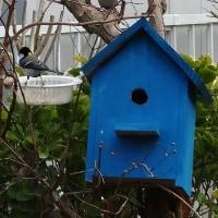 小鳥に魅せられて