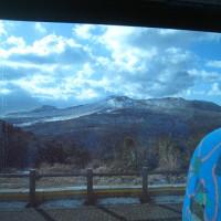 伊豆大島 三原山ハイキングと椿祭り