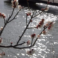 菱の実と梅の花
