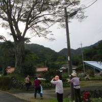 3 盛太ヶ岳(891m:島根県吉賀町)登山  登山口の象徴