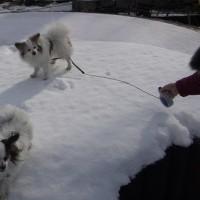 雪、こえぇぇぇぇ