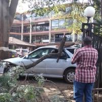 ナイロビ生活(26) 豊かな緑にひそむ危険性