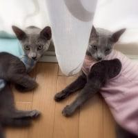 寿々ちゃん、nana&mimiちゃん、そしてエリオットくん、そしてkaiくん