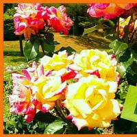 「元氣でいてね❗」5月14日(日)「母の日」の贈り物🎵