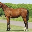 東サラ:17年度募集馬・・・初日に応募しました♪♪