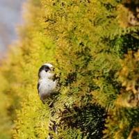 冬の野鳥⑭