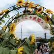 ・ 座間 栗原ひまわり祭り 2017