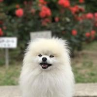 公園散歩・・・@庄内緑地公園
