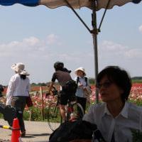 鴻巣ポピー・ハッピースクエア<幸せ広場>