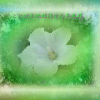 『 これ以上地球汚すな花木槿 』平和の砦575交心rs2001