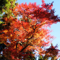 鎌倉を紅葉ハイキング