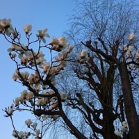 桜は咲いたけど