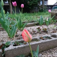 母が育てていた庭の草花