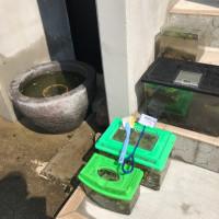 メダカの家の大掃除
