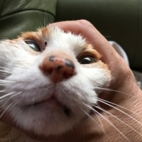 飼い猫の暴走