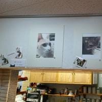 ネコ写コンテスト in Cafeあつめ木!