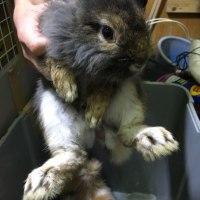 ウサギの里親募集
