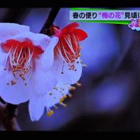 2/28 森田さんの 梅のアップ