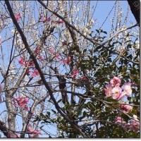 立春! 春を探してⅢ・  花と緑の振興センター:梅園