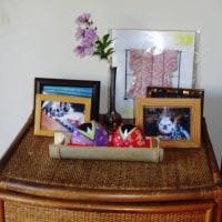 我家の雛飾りは立春の日から