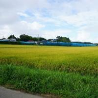 ちょっと良い貸家プロジェクト!『 岬町中原のリノべ風?な貸家 』。24日(月)~土地造成工事開始予定!です。