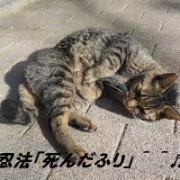 「二代目忍者ネコ」さんも、やはり忍法つかうのね^^?