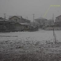 新潟は雪模様の天候です(^^♪