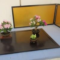 春の小品盆栽展