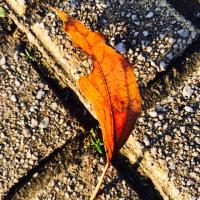秋じゃありませんから〜今です。昨日の夕方です。