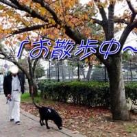 「 秋の公園 」でお散歩中~♪