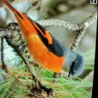 台湾野鳥撮影旅の6日目