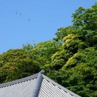 『新緑』 地福寺